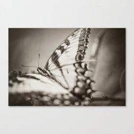 BW Swallowtail Canvas Print