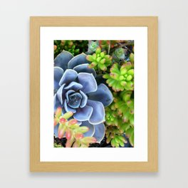 Succulent Bunch Framed Art Print