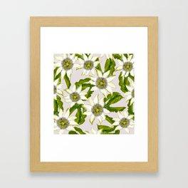 Passion Flower. Framed Art Print