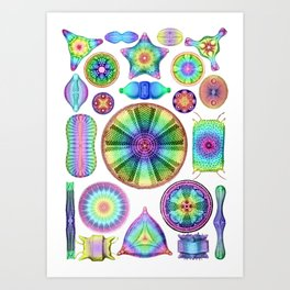 Ernst Haeckel Rainbow Diatoms Art Print