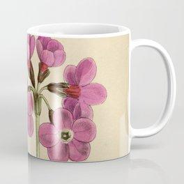 Primula sinopurpurea 1918 Coffee Mug