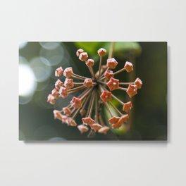 Flowers that shaped of stars Metal Print