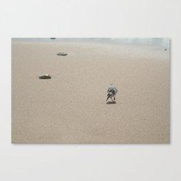 Sandpiper bird on wet sand Canvas Print