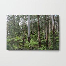 Mountain Rainforest Metal Print