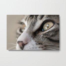 Macro Cat Metal Print
