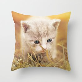 Kitten | Chaton Throw Pillow