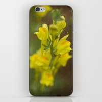 montana iPhone & iPod Skins featuring Montana  Wildflower by Lori Anne Photography