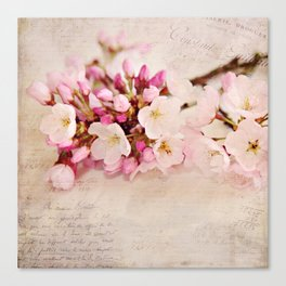cherry blossoms with typography Canvas Print