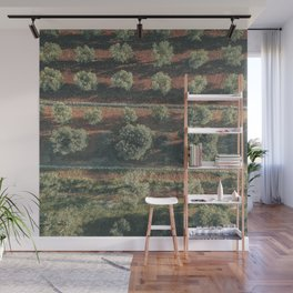 Aerial photo, italian landscape, drone photography, olive trees, nature patterns, Apulia Wall Mural