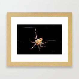 The Spiders Web Framed Art Print
