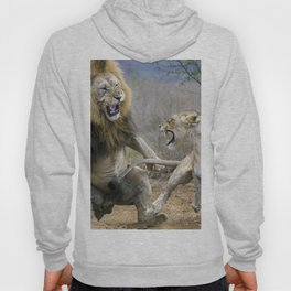 Marvelous Gracious Male Female African Lions Aggression In Desert Close Up Ultra HD Hoody