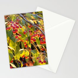 Bright red berries on a tree Stationery Cards