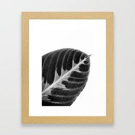 Calathea B&W Framed Art Print