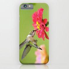 Hummingbird VII iPhone 6 Slim Case