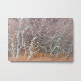 Autumnal Scotland Metal Print