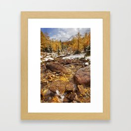 I - Larch trees in fall after first snow, Banff NP, Canada Framed Art Print
