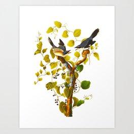 Loggerhead Shrike Bird Art Print