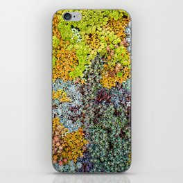 Wall of Succulents iPhone Skin