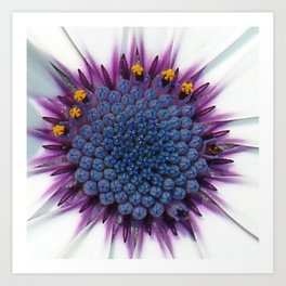 Stunning African Daisy Tropical Flower Macro Art Print