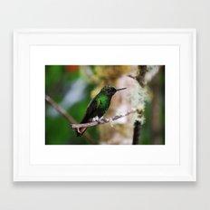 Ecuadorian Hummingbird 2  Framed Art Print