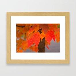 Crimson Fall Framed Art Print