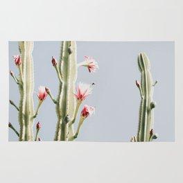 Cereus Cactus Blush Rug