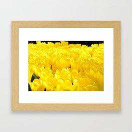 Yellow Tulip Framed Art Print