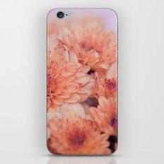 Chrysanthemum flowers 8605 iPhone & iPod Skin