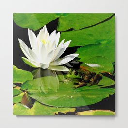 Frog with white waterlily reflection Metal Print