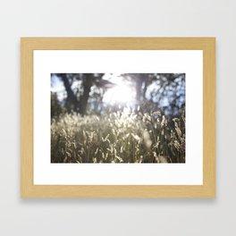 kosciuszko national park Framed Art Print