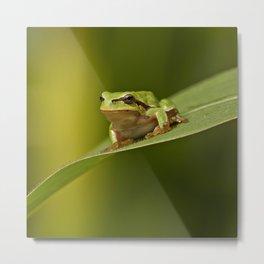 Frog's life Metal Print