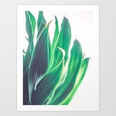 Dracaena Leaves Art Print