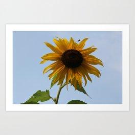 Rising Sun-flower Art Print