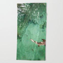 Look at the Shark Beach Towel