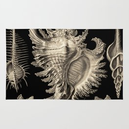 Ernst Haeckel Prosobranchia Sea Shells Rug