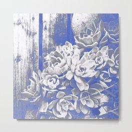 Cobalt & White Hen & Chick Succulents Metal Print