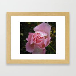 WATER DROPLETS ON PINK ROSE Framed Art Print