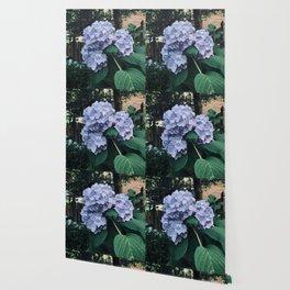 Hydrangeas No4 Wallpaper
