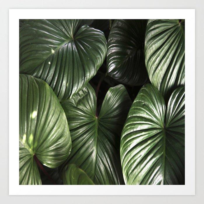 dark green jungle rainforest tropical leaf art print by