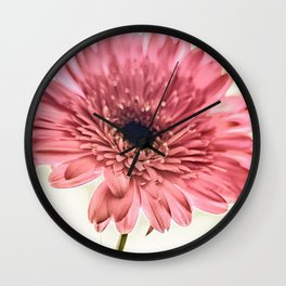 A Daisy for You a bouquet of Gerber Daisies Wall Clock