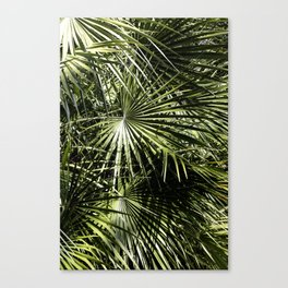 Between The Light Canvas Print