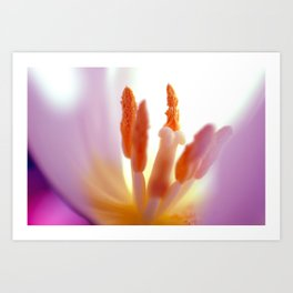 TULIP DAY II Art Print