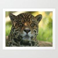 jaguar Art Prints featuring Jaguar by Sean Foreman