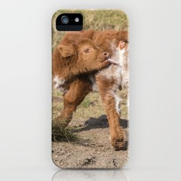 Baby licking Scottish Highland Coo iPhone Case