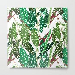 Polka Dot Begonia Leaves in White Metal Print