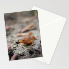 Spring Walk Stationery Cards