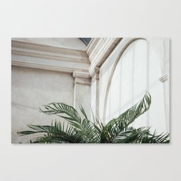 Palm in Orangery Canvas Print