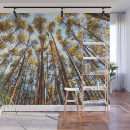 Forest landscape photography - trees and sky Wall Mural