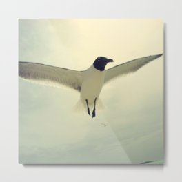 bird 2/3  by akashidan Metal Print