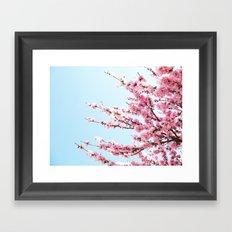 Pink Blossom  Framed Art Print